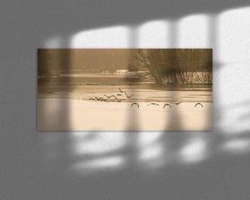 Gansen die opvliegen bij de bevroren vijvers van Erenstein bij Kerkrade van John Kreukniet