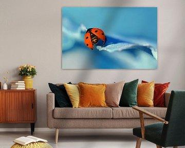 Lieveheersbeestje van Violetta Honkisz