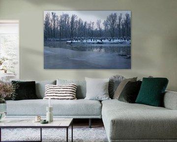 Biesbosch in de winter von Michel van Kooten