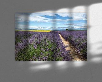 Lavendelveld bij Castellane