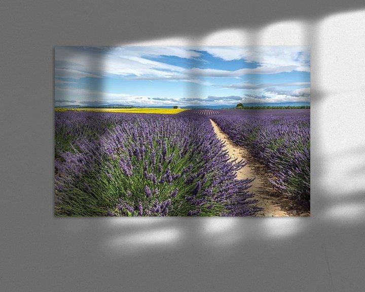 Impression: Lavendelveld bij Castellane sur Peter Moerman