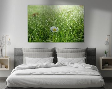 Madeliefje in gras van Michel van Kooten