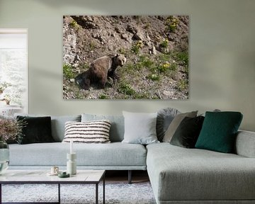 Grizzly Bear van Arie Storm