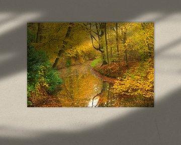 Bos met gele bladeren in de herfst van Michel van Kooten