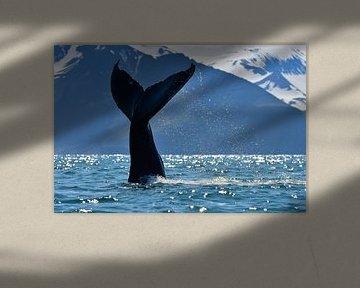 Bultrug walvis die z'n staart op het water slaat. von Koen Hoekemeijer