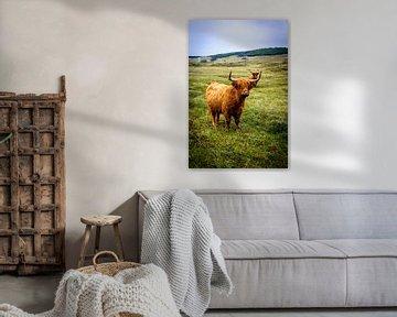 Koe in de duinen von Tom de Groot