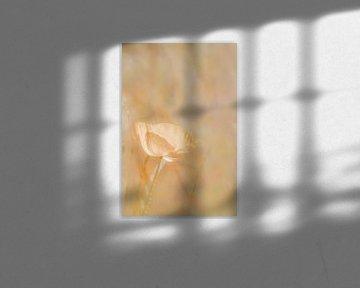 Mohn-Lachsrosa weich von Ingrid Van Damme fotografie