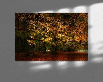 Herfst in het park sur Ingrid Van Damme fotografie
