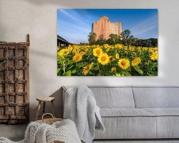 Zonnebloemen in Groningen von Frenk Volt