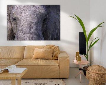 Der Elefant - Afrika wildlife von W. Woyke