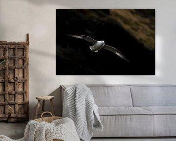 Noordse stormvogel (IJsland) von Marcel Antons