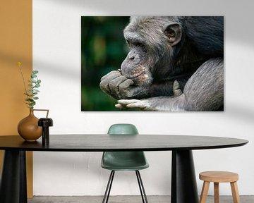 Chimpansee denkt na.  von Michar Peppenster