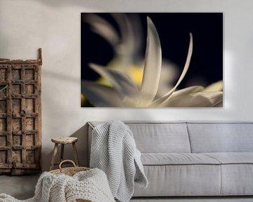 Weisse Blüte van Roswitha Lorz