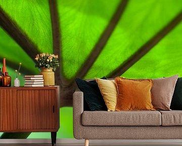 Tegenlichtopname van een groen tropisch blad. van Birgitte Bergman