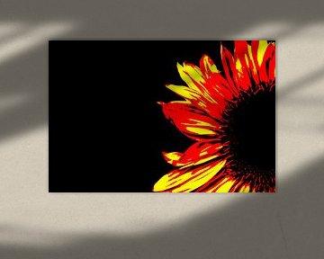 Sonnenblume von Leo de Graaf