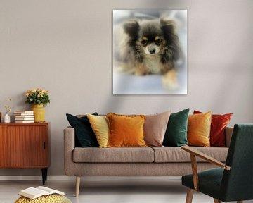 Chihuahua Portrait van Nicky`s Prints