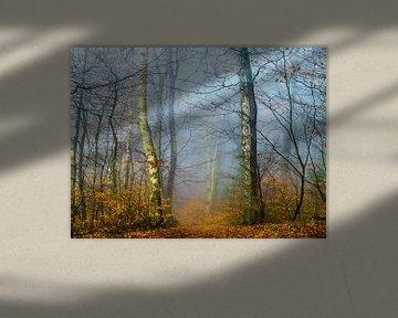Forest in the autumn sur brava64 - Gabi Hampe