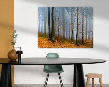 Trees in the autumn van brava64 - Gabi Hampe