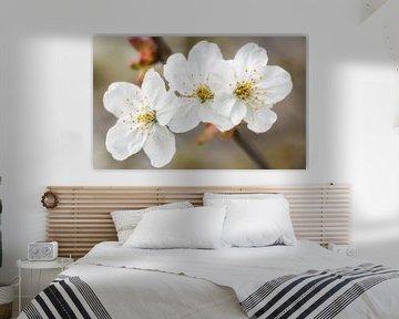 Flowers in spring van Lorena Cirstea