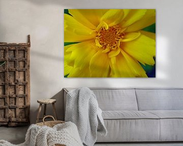 Gele bloem van Frank Kleijn