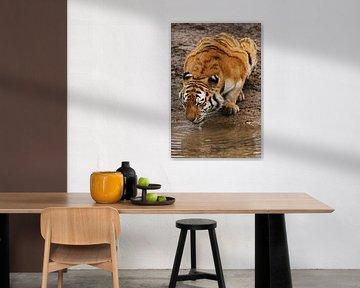 Siberische tijger von Renate Peppenster