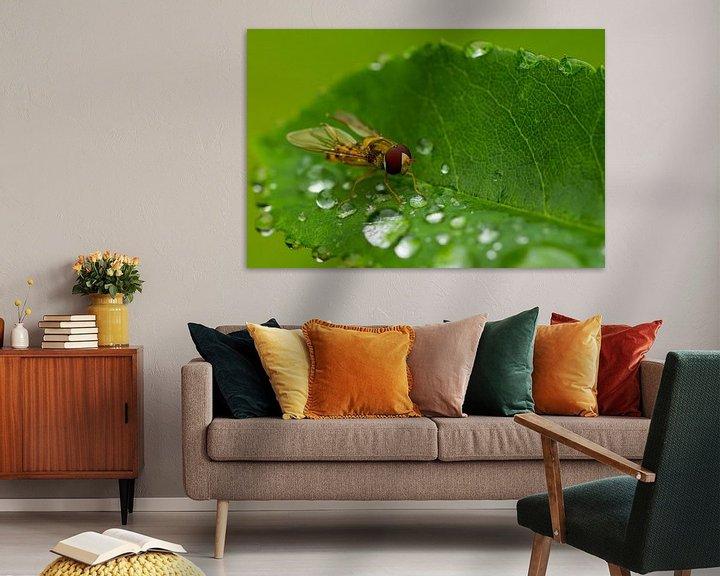 Sfeerimpressie: Syrphidae van Ursula Di Chito