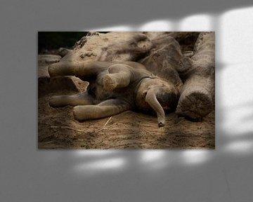Jonge olifant von Renate Peppenster