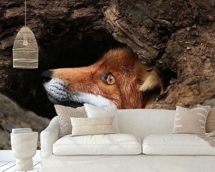 Beispiel fototapete: Red fox  von Renate Peppenster