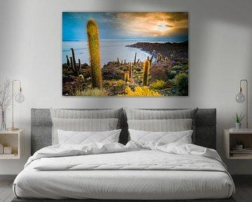 Inca Wasi, cactus island van Jelmer Jeuring