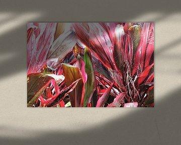 Planten von Frans van Gruijthuijsen