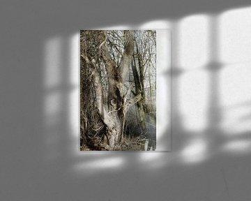 Tree Magic 11 van MoArt (Maurice Heuts)