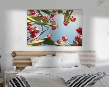 Rode tulpenveld van onderen van Sandra Keereweer