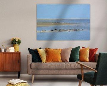 Zonnende zeehonden van Astrid Koopmans