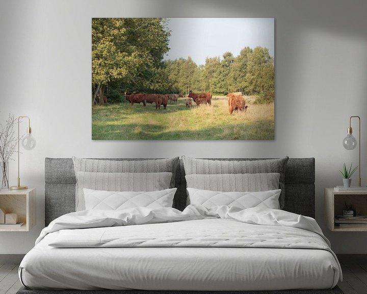 Sfeerimpressie: Een kudde Schotse Hooglanders met kalveren van Henk van den Brink