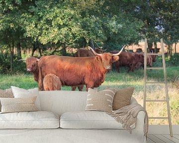 Schotse Hooglander koe met kalf van Henk van den Brink