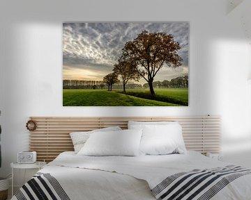 Eikenbomen in het ochtendlicht van Sjoerd van der Wal