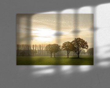 Eiken tijdens de zonsopkomst van Sjoerd van der Wal