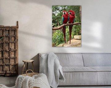 koppel papagaaien van ChrisWillemsen
