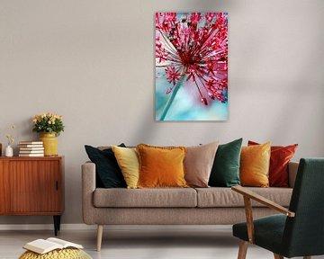 Allium van Violetta Honkisz
