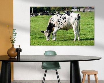 zwart bonte koe graast op groen gras