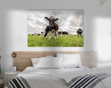 Koe van Maurice B Kloots      www.Fototrends.nl