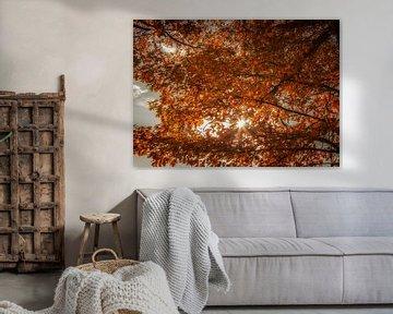 Zonlicht valt  door de bomen op prachtige herfstkleuren van John Kreukniet