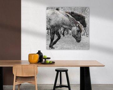 Konik Pferde von Ricardo Bouman
