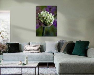 white purple van Luchiena Heine