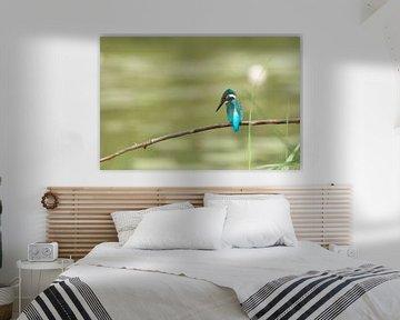 IJsvogel van Martin Bredewold
