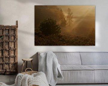 Tegenlicht op een mistige ochtend van Francois Debets