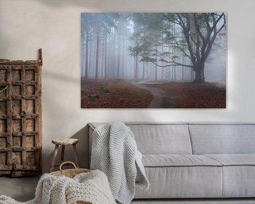 Walking into the fog van Olha Rohulya