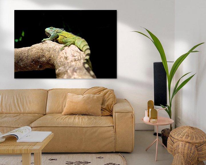 Sfeerimpressie: Groene leguaan op Bonaire van Guy Florack