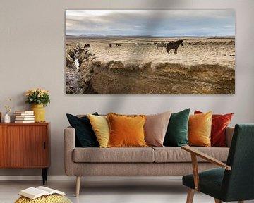 Pony's op IJsland (1) van Hans Brinkel