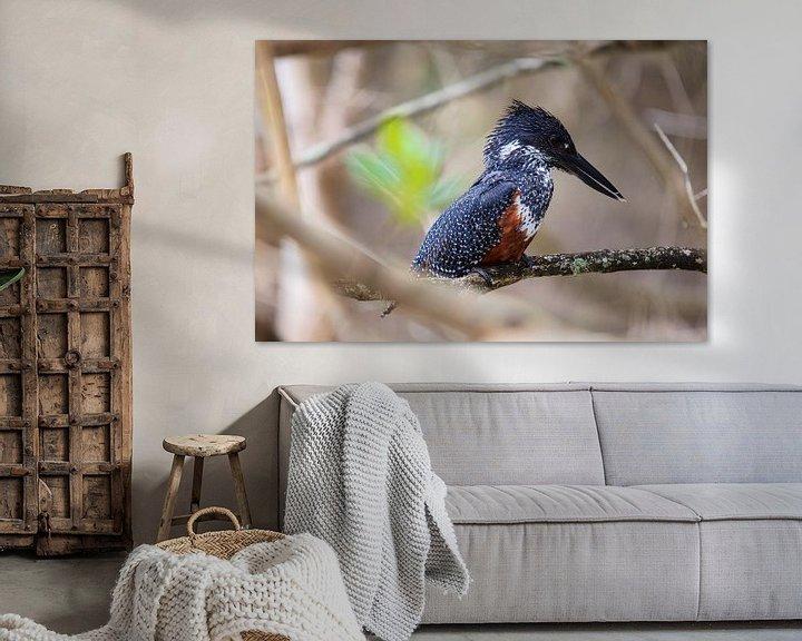 Sfeerimpressie: Vrouwelijke Afrikaanse reuzenijsvogel van Guy Florack